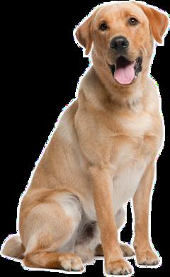 dog stickers freetoedit