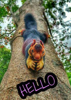 remixed squirrel hello freetoedit