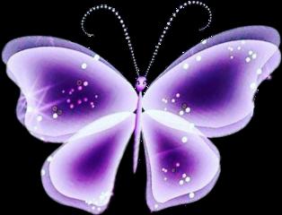 butterfly mariposa purple morado freetoedit