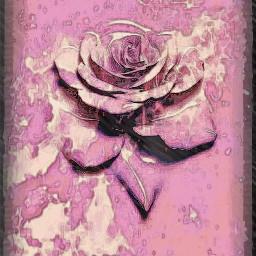 freetoedit rose pastel pink