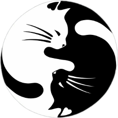 yingyang catblack blackcat cats cat