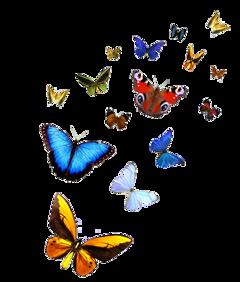 ftstickers butterfly freetoedit