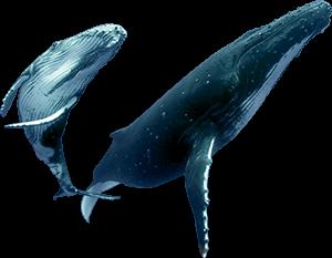 ftestickers whale freetoedit