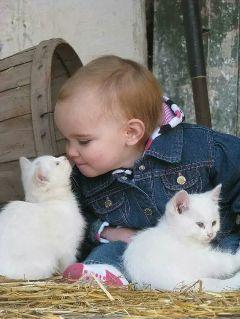 freetoedit cats baby kiss