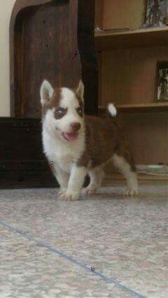 freetoedit dog puppy beautiful baby