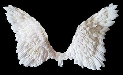 alas wings angel freetoedit