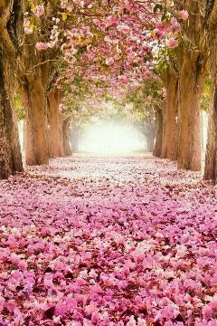 nature prettypink pink trees spring remixit