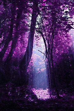 freetoedit winter purple nature forest