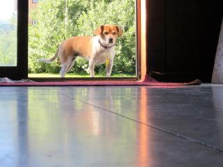 mydog downlow reflection freetoedit