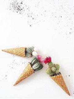 cacti icecream cone freetoedit