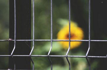thedramaeffect fullframe sunflower