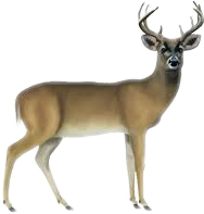 nature ciervo venado freetoedit