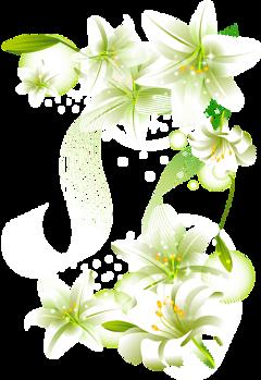 blossom freetoedit