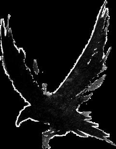 crow tattoo bird nature freetoedit