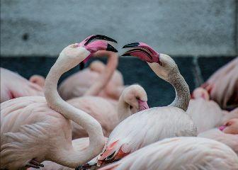 freetoedit flamingo animal bird beach