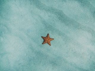 freetoedit blue sand star sea