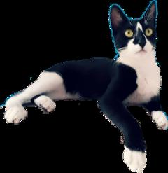 cat chica freetoedit