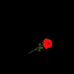 rip red rose dreams freetoedit