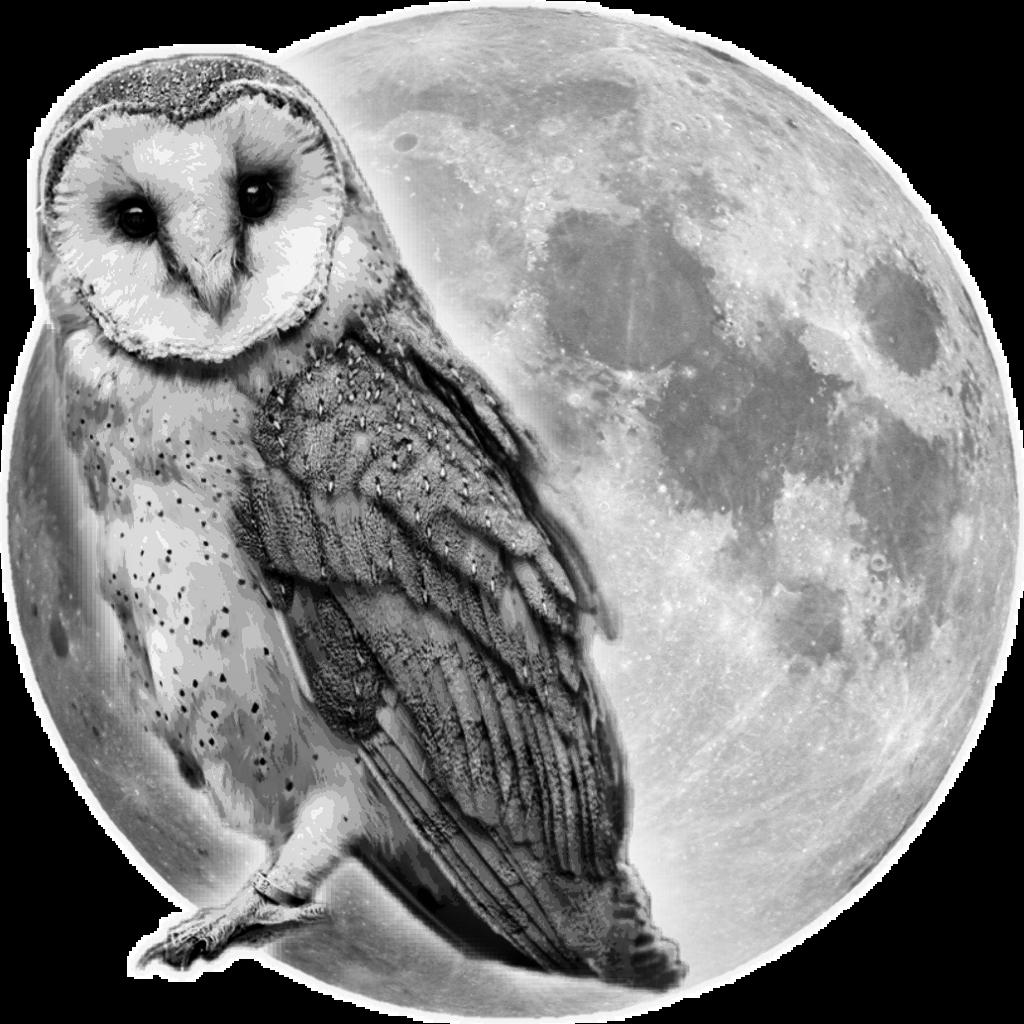 ##owlinmoon