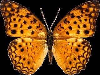 sticker butterfly yellow freetoedit