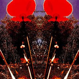 mirroreffect californiapoppy popart bold