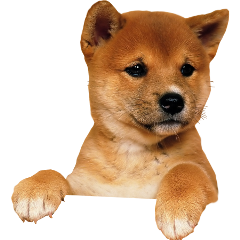 ftestickers dog freetoedit