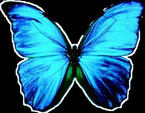 mariposa animals freetoedit