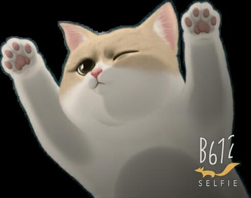 #Gato#B612#Roxy636