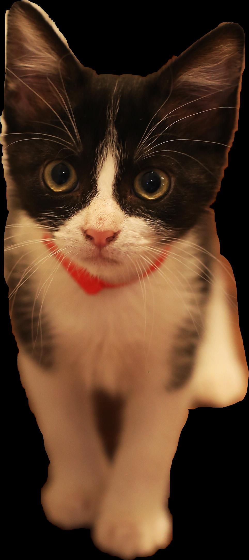 #kitty #cute #animals#freetoedit