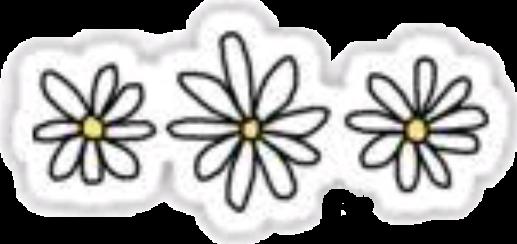 ##flores #margaritas