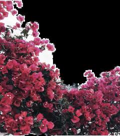 цветы freetoedit