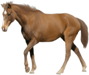horses sticker brown cute awesome