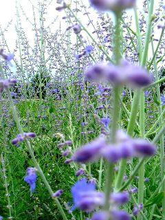 freetoedit purple noediting flowers