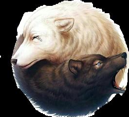 wolves blackandwhite🐺🐺 freetoedit blackandwhite
