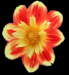 ftestickers yellow orange flower