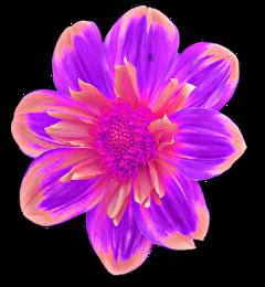 flower flowers fleurs flores ftestickers