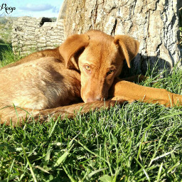 animals dog summer pccutepets