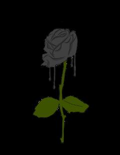 rose black blackrose green freetoedit
