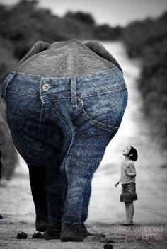 freetoedit interesting art blackandwhite elephant