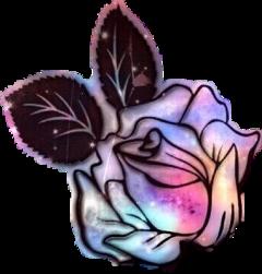 rose petals colorful freetoedit