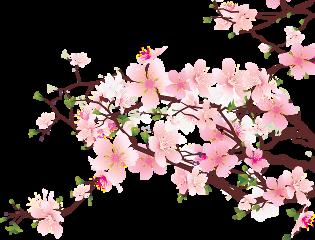 rama arbol sakura sakuratree tree