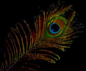 ftestickers peacock freetoedit