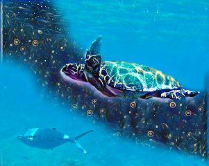 sissi crete greece sea turtle freetoedit