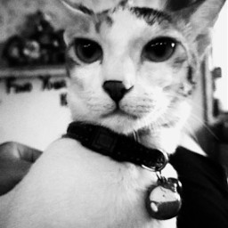 freetoedit cat meow kitten