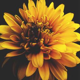 freetoedit spider flower pcbeautyasiseeit beautyasiseeit