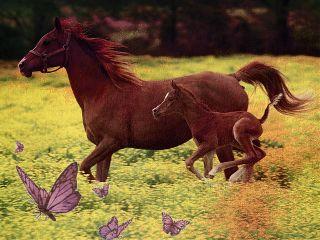horses colorsplasheffect stenciler8 butterflies sticker freetoedit