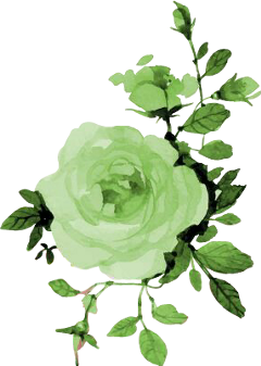 green rose rosa flowers flores