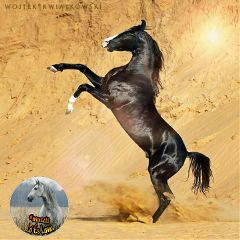 horse freetoedit