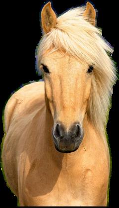 animals horses freetoedit