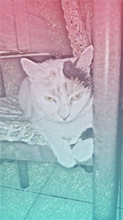 pets cats animalipertuttalavita